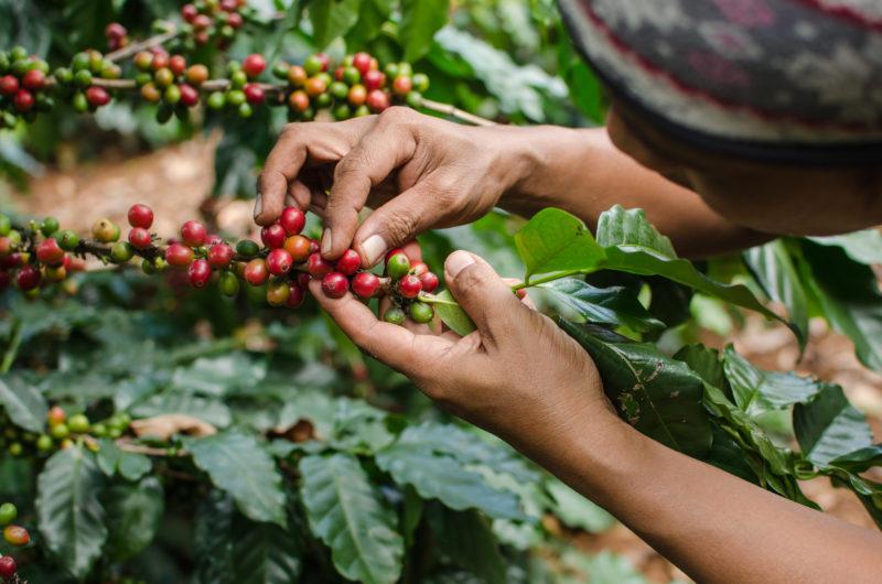 Coffee bonga1965 Adobe Stock 74955106
