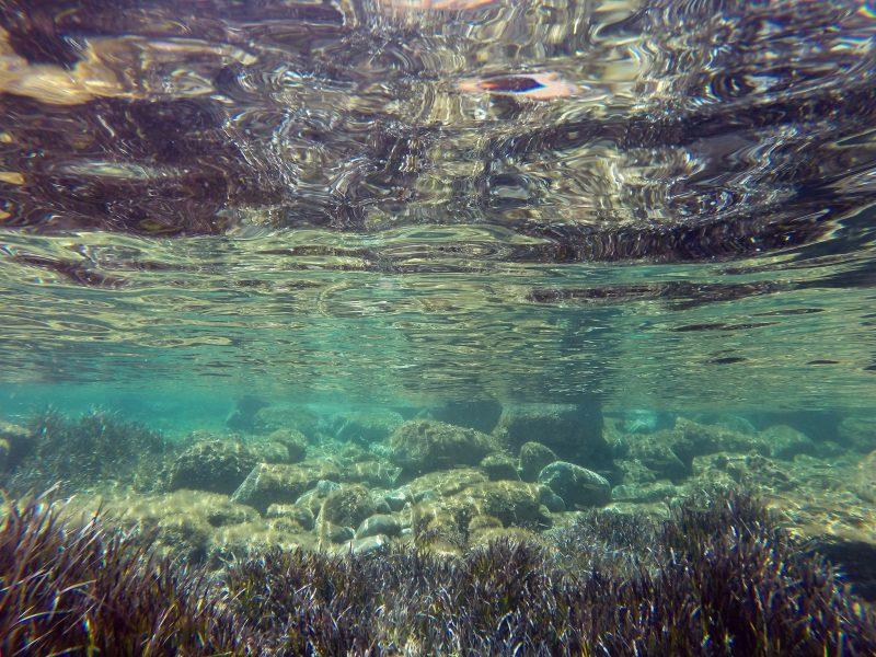 Seagrass Elisa Alonso Aller Flickr